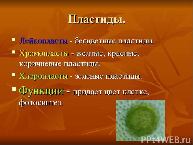 Пластиды. Лейкопласты - бесцветные пластиды. Хромопласты - желтые, красные, коричневые пластиды. Хлоропласты - зеленые пластиды. Функции - придает цвет клетке, фотосинтез.