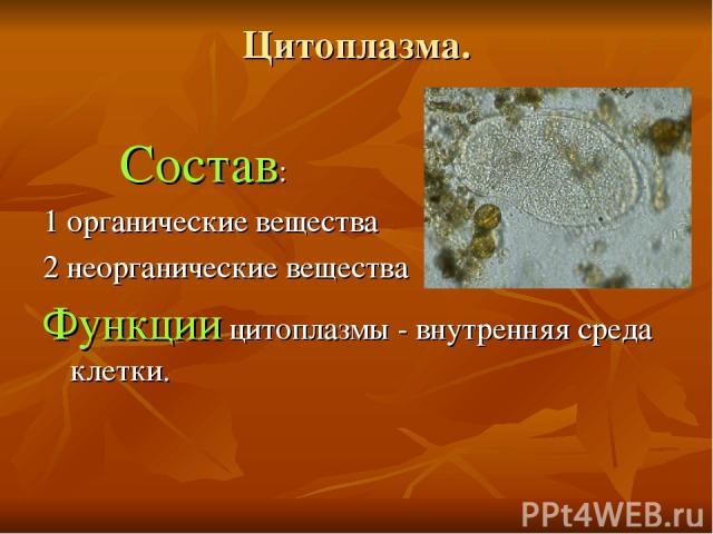 Цитоплазма. Состав: 1 органические вещества 2 неорганические вещества Функции цитоплазмы - внутренняя среда клетки.