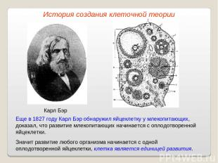 Карл Бэр Еще в 1827 году Карл Бэр обнаружил яйцеклетку у млекопитающих, доказал,