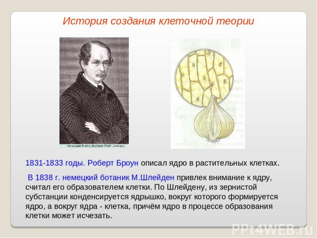 1831-1833 годы. Роберт Броун описал ядро в растительных клетках. В 1838 г. немецкий ботаник М.Шлейден привлек внимание к ядру, считал его образователем клетки. По Шлейдену, из зернистой субстанции конденсируется ядрышко, вокруг которого формируется …