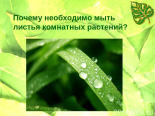 Почему необходимо мыть листья комнатных растений?