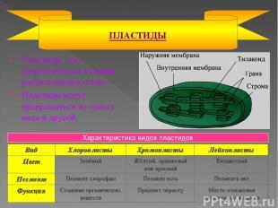 Пластиды - это энергетические станции растительной клетки. Пластиды могут превра
