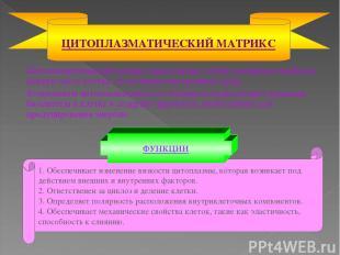 Цитоплазматический матрикс представляет собой основную и наиболее важную часть к