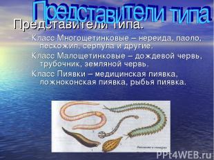 Представители типа. Класс Многощетинковые – нереида, паоло, пескожил, серпула и