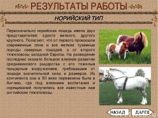 Первоначально норийская лошадь имела двух представителей: одного мелкого, другог