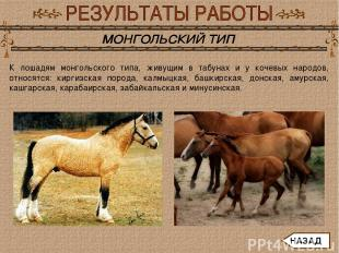 К лошадям монгольского типа, живущим в табунах и у кочевых народов, относятся: к