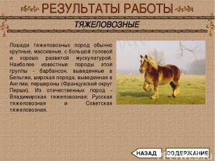 Лошади тяжеловозных пород обычно крупные, массивные, с большой головой и хорошо