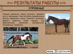 Лошади упряжных пород сильные, среднего роста, массивные. Они способны сравнител