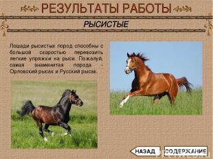 Лошади рысистых пород способны с большой скоростью перевозить легкие упряжки на