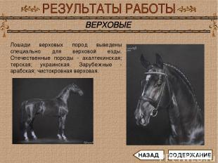 Лошади верховых пород выведены специально для верховой езды. Отечественные пород