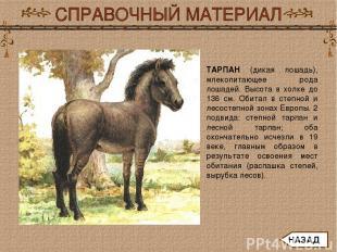 ТАРПАН (дикая лошадь), млекопитающее рода лошадей. Высота в холке до 136 см. Оби