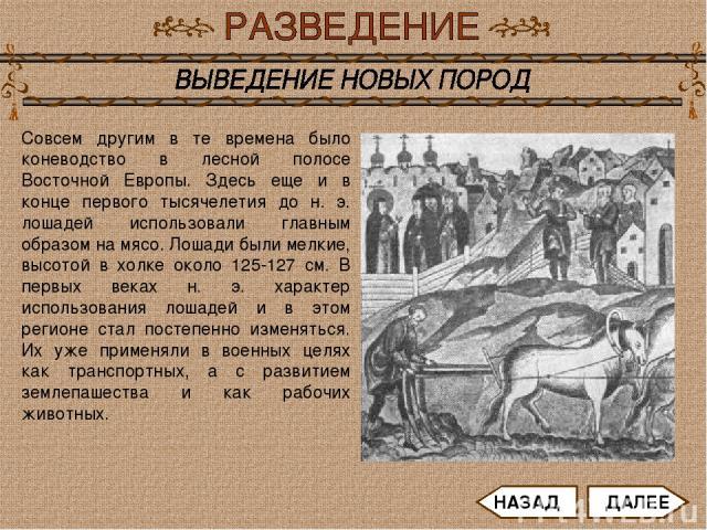 Совсем другим в те времена было коневодство в лесной полосе Восточной Европы. Здесь еще и в конце первого тысячелетия до н. э. лошадей использовали главным образом на мясо. Лошади были мелкие, высотой в холке около 125-127 см. В первых веках н. э. х…