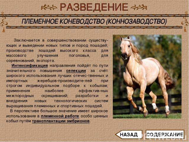 Заключается в совершенствовании существу-ющих и выведении новых типов и пород лошадей; производстве лошадей высокого класса для массового улучшения поголовья, для соревнований, экспорта. Интенсификация направления пойдёт по пути значительного повыше…