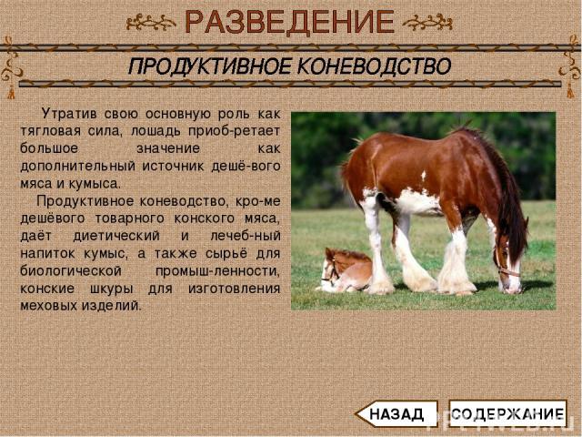 Утратив свою основную роль как тягловая сила, лошадь приоб-ретает большое значение как дополнительный источник дешё-вого мяса и кумыса. Продуктивное коневодство, кро-ме дешёвого товарного конского мяса, даёт диетический и лечеб-ный напиток кумыс, а …