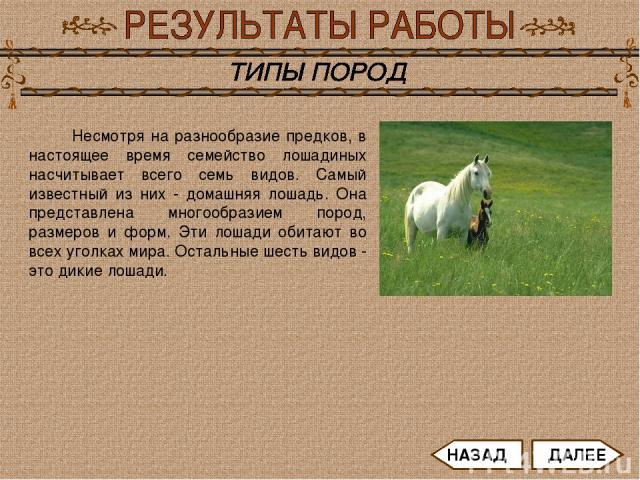 Несмотря на разнообразие предков, в настоящее время семейство лошадиных насчитывает всего семь видов. Самый известный из них - домашняя лошадь. Она представлена многообразием пород, размеров и форм. Эти лошади обитают во всех уголках мира. Остальные…