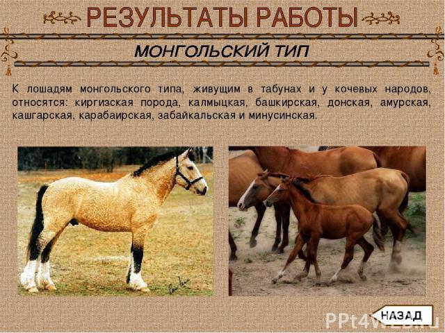 К лошадям монгольского типа, живущим в табунах и у кочевых народов, относятся: киргизская порода, калмыцкая, башкирская, донская, амурская, кашгарская, карабаирская, забайкальская и минусинская. НАЗАД
