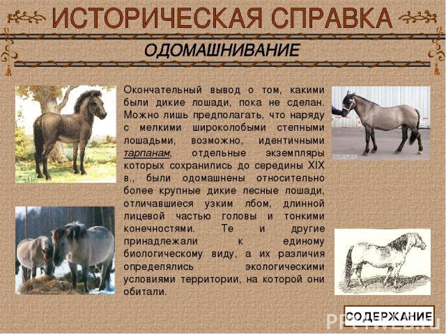 Окончательный вывод о том, какими были дикие лошади, пока не сделан. Можно лишь предполагать, что наряду с мелкими широколобыми степными лошадьми, возможно, идентичными тарпанам, отдельные экземпляры которых сохранились до середины ХIХ в., были одом…