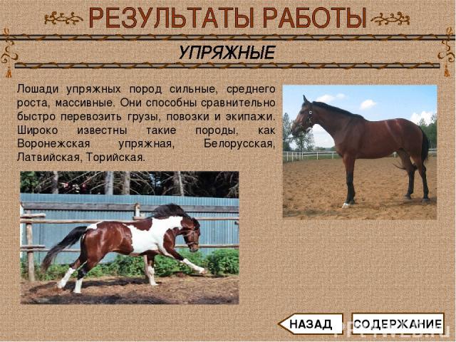 Лошади упряжных пород сильные, среднего роста, массивные. Они способны сравнительно быстро перевозить грузы, повозки и экипажи. Широко известны такие породы, как Воронежская упряжная, Белорусская, Латвийская, Торийская. СОДЕРЖАНИЕ НАЗАД