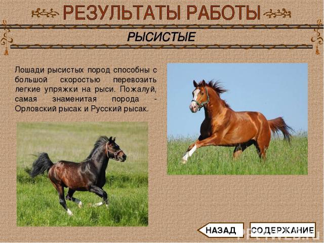 Лошади рысистых пород способны с большой скоростью перевозить легкие упряжки на рыси. Пожалуй, самая знаменитая порода - Орловский рысак и Русский рысак. СОДЕРЖАНИЕ НАЗАД