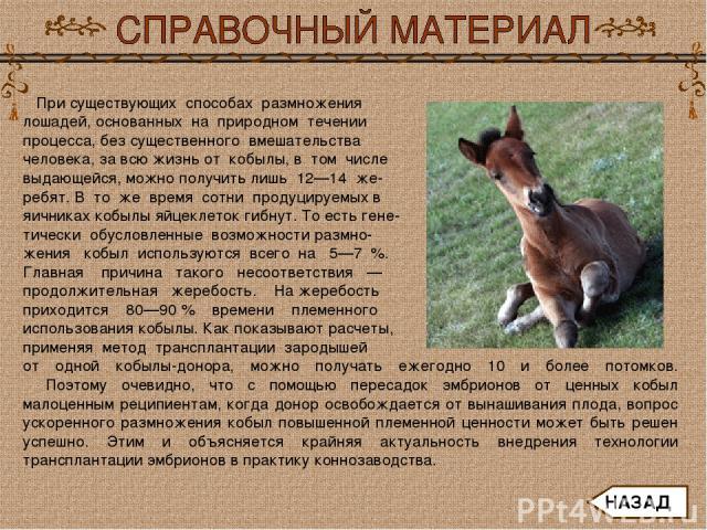 При существующих способах размножения лошадей, основанных на природном течении процесса, без существенного вмешательства человека, за всю жизнь от кобылы, в том числе выдающейся, можно получить лишь 12—14 же- ребят. В то же время сотни продуцируе…