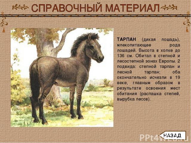 ТАРПАН (дикая лошадь), млекопитающее рода лошадей. Высота в холке до 136 см. Обитал в степной и лесостепной зонах Европы. 2 подвида: степной тарпан и лесной тарпан; оба окончательно исчезли в 19 веке, главным образом в результате освоения мест обита…