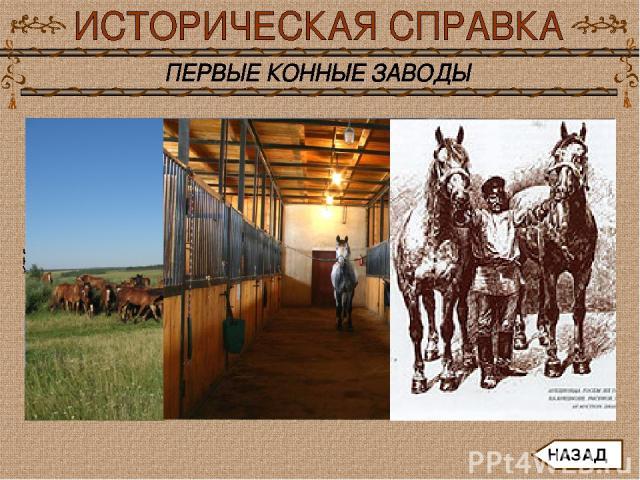 Так возникали конные заводы с конюшнями, манежами, с огоро-женными участками для выпаса и водопоя, с лугами и полями, на которых человек сам заготавливал сено, солому и зерно для животных на всю зиму. За лошадьми ухаживали опытные работники - конюхи…