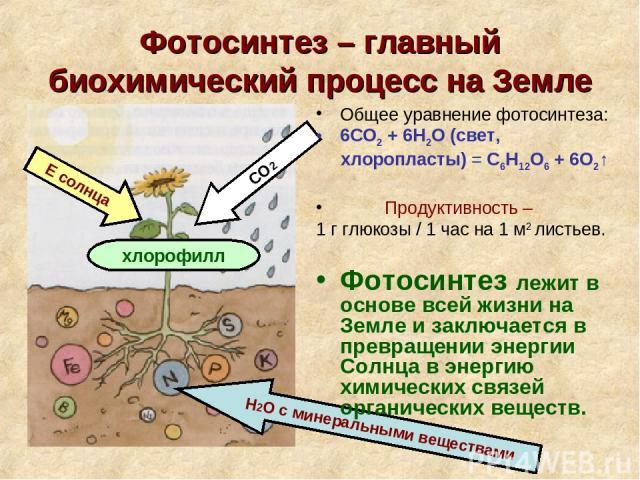 пруфпики ваших химическая формула фотосинтеза декор советы