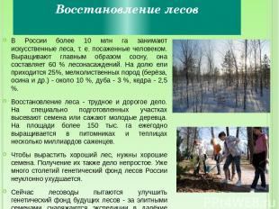 Восстановление лесов В России более 10 млн га занимают искусственные леса, т. е.