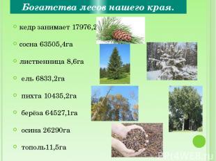 Богатства лесов нашего края. кедр занимает 17976,2га сосна 63505,4га лиственница