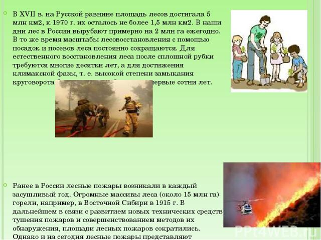 В XVII в. на Русской равнине площадь лесов достигала 5 млн км2, к 1970 г. их осталось не более 1,5 млн км2. В наши дни лес в России вырубают примерно на 2 млн га ежегодно. В то же время масштабы лесовосстановления с помощью посадок и посевов леса по…