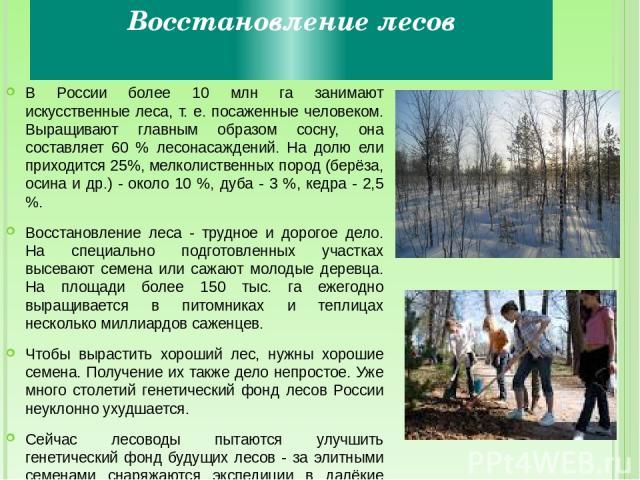 Восстановление лесов В России более 10 млн га занимают искусственные леса, т. е. посаженные человеком. Выращивают главным образом сосну, она составляет 60 % лесонасаждений. На долю ели приходится 25%, мелколиственных пород (берёза, осина и др.) - ок…