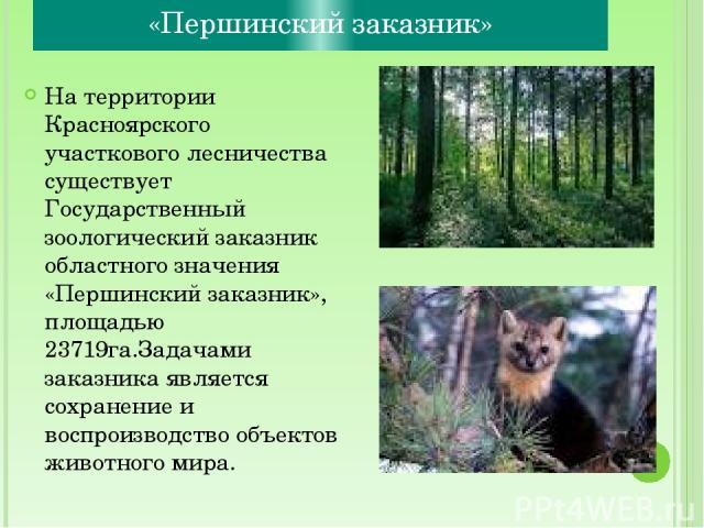 «Першинский заказник» На территории Красноярского участкового лесничества существует Государственный зоологический заказник областного значения «Першинский заказник», площадью 23719га.Задачами заказника является сохранение и воспроизводство объектов…