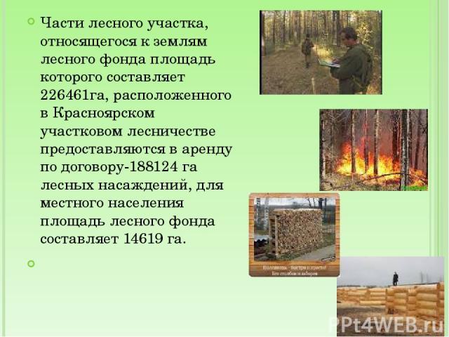 Части лесного участка, относящегося к землям лесного фонда площадь которого составляет 226461га, расположенного в Красноярском участковом лесничестве предоставляются в аренду по договору-188124 га лесных насаждений, для местного населения площадь ле…
