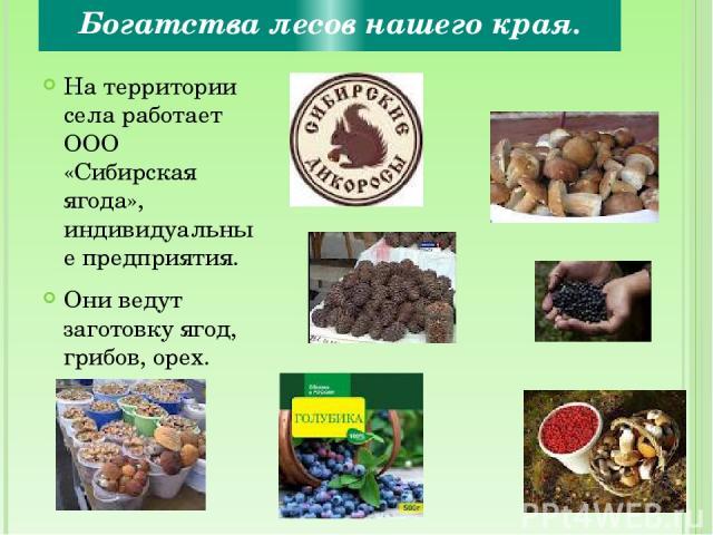Богатства лесов нашего края. На территории села работает ООО «Сибирская ягода», индивидуальные предприятия. Они ведут заготовку ягод, грибов, орех.