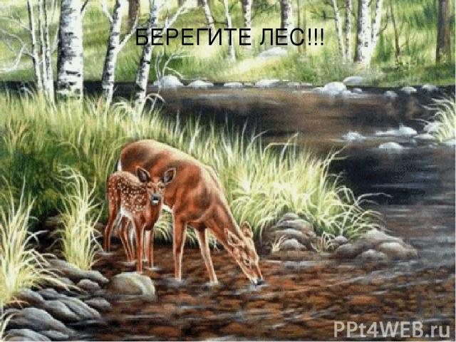 БЕРЕГИТЕ ЛЕС!!!