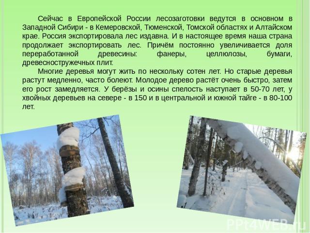 Сейчас в Европейской России лесозаготовки ведутся в основном в Западной Сибири - в Кемеровской, Тюменской, Томской областях и Алтайском крае. Россия экспортировала лес издавна. И в настоящее время наша страна продолжает экспортировать лес. Причём по…
