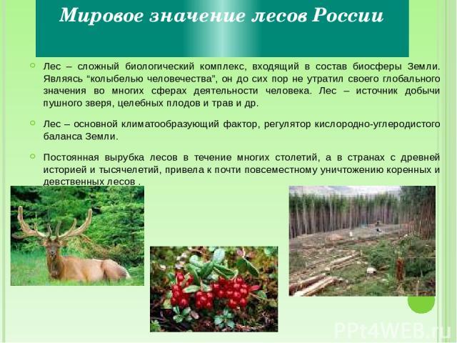 """Мировое значение лесов России Лес – сложный биологический комплекс, входящий в состав биосферы Земли. Являясь """"колыбелью человечества"""", он до сих пор не утратил своего глобального значения во многих сферах деятельности человека. Лес – источник добыч…"""