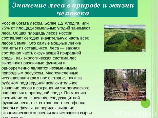 Значение леса в природе и жизни человека Россия богата лесом. Более 1,2 млрд га, или 75% от площади земельных угодий занимают леса. Обшая площадь лесов России составляет сегодня значительную часть всех лесов Земли. Это самые мощные легкие планеты из…