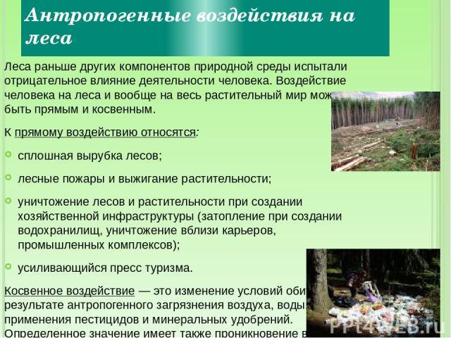 Антропогенные воздействия на леса Леса раньше других компонентов природной среды испытали отрицательное влияние деятельности человека. Воздействие человека на леса и вообще на весь растительный мир может быть прямым и косвенным. К прямому воздействи…