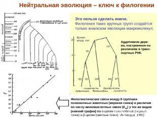 Филогенетические связи между 8 группами позвоночных животных (верхняя схема) и р