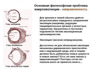 Основная философская проблема макроэволюции - направленность Для органов и ткане