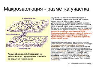 Макроэволюция - разметка участка Изучение палеонтологических находок и современн