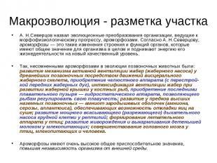 Макроэволюция - разметка участка А. Н.Северцов назвал эволюционные преобразовани