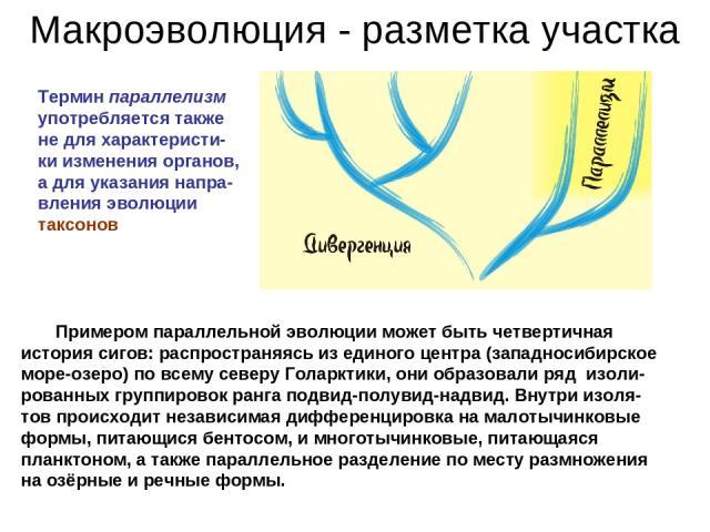 Макроэволюция - разметка участка Термин параллелизм употребляется также не для характеристи-ки изменения органов, а для указания напра-вления эволюции таксонов Примером параллельной эволюции может быть четвертичная история сигов: распространяясь из …