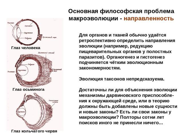 Основная философская проблема макроэволюции - направленность Для органов и тканей обычно удаётся ретроспективно определить направления эволюции (например, редукцию пищеварительных органов у полостных паразитов). Органогенез и гистогенез подчиняется …