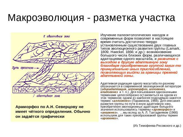 Макроэволюция - разметка участка Изучение палеонтологических находок и современных форм позволяет в настоящее время считать достаточно твердо установленным существование двух главных типов эволюционного развития группы (Lamark, 1809, Haeckel, 1866; …