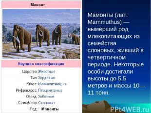 Ма монты (лат. Mammuthus) — вымерший род млекопитающих из семейства слоновых, жи