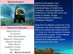 Шерстистый мамонт (лат. Mammuthus primigenius) — вымерший вид из семейства слоно