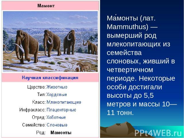 Ма монты (лат. Mammuthus) — вымерший род млекопитающих из семейства слоновых, живший в четвертичном периоде. Некоторые особи достигали высоты до 5,5 метров и массы 10—11 тонн.