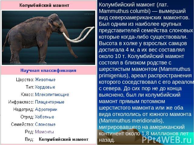 Колумбийский мамонт (лат. Mammuthus columbi) — вымерший вид североамериканских мамонтов. Был одним из наиболее крупных представителей семейства слоновых, которые когда-либо существовали. Высота в холке у взрослых самцов достигала 4 м, а их вес соста…